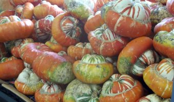local farmers market finds - Turk's Turban Squash from Castroville