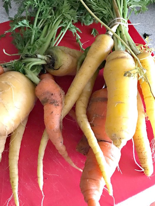 Farmers Market Finds for January - organic carrots