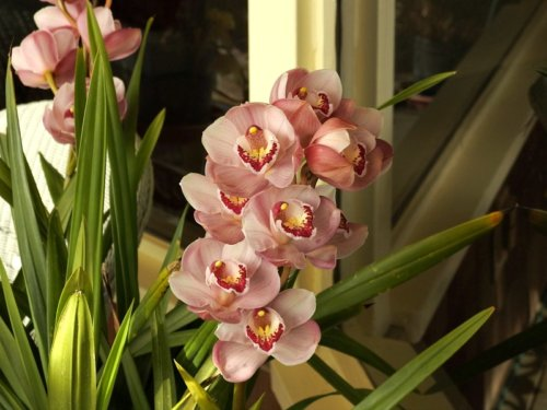 Beautiful Signs of Spring: Orchids