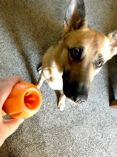 Entertaining and Interactive Dog Toys for Your Pooch - Qwizl treat toy for dogs