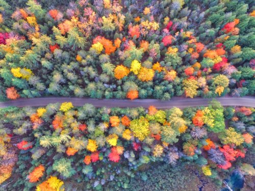 10 East Coast Campgrounds Perfect for Seeing Fall Foliage